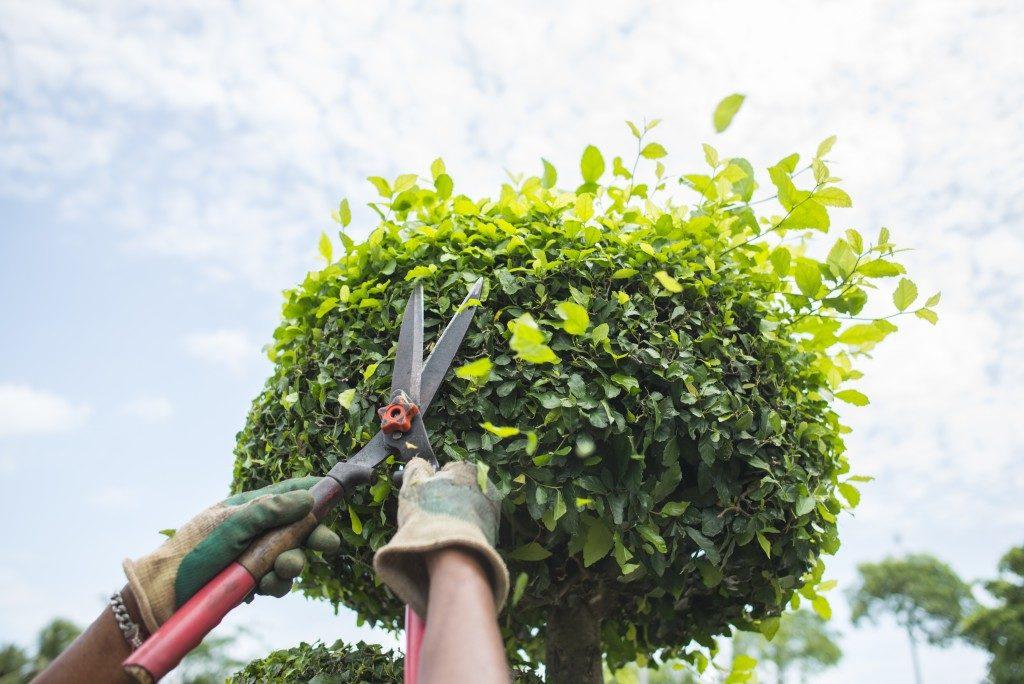 trimming plant